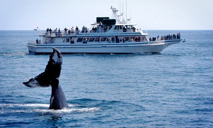 7 Seas Whale Watch - 7 Seas Whale Watch: Whale-Watching Trip from 7 Seas Whale Watch (Up to 49% Off). Five Options Available.