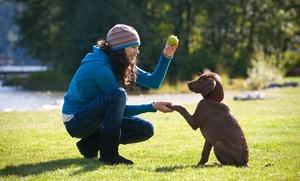 Clase de adiestramiento canino a domicilio con 1 o 3 clases grupales desde 19 € o durante 6 meses por 79 €