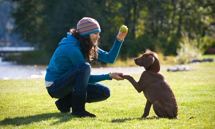 Meadowlake Pet Resort - South Acres/ Crestmont Park: Training Evaluation and 30-Minute Private Lesson for One or Two Dogs at Meadowlake Pet Resort (Up to 85% Off)
