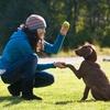 Clases adiestramiento canino hasta -90%