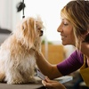 Up to 53% Off Dog-Grooming Packages