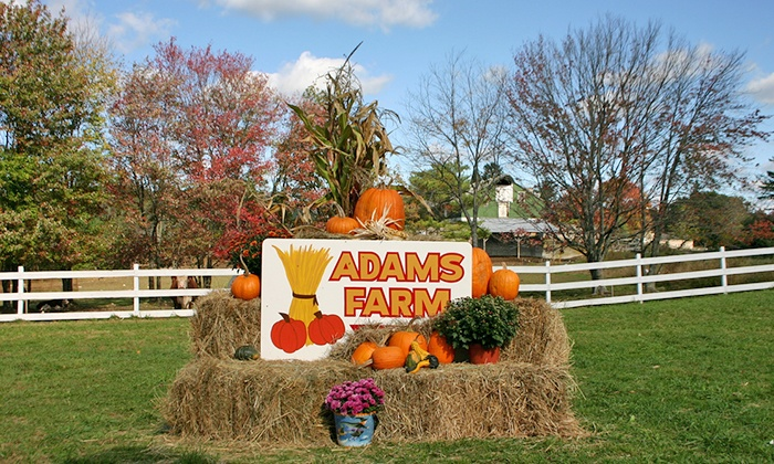 Adam's Farm - Cumberland: Fall Farm Outing for Up to Six at Adam's Farm (Up to a40% Value). Four Weekends Available.