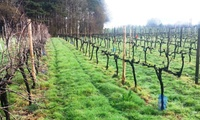 Vineyard Tour with Lunch and Wine Tasting for Two at Sedlescombe Organic Vineyard (Up to 50% Off)