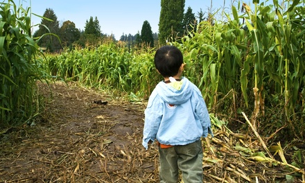Corn Maze for Two or Four Maan Farms Market & Estate Winery (Up to 54% Off)