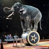 El Jebel Shrine Circus – Up to 51% Off