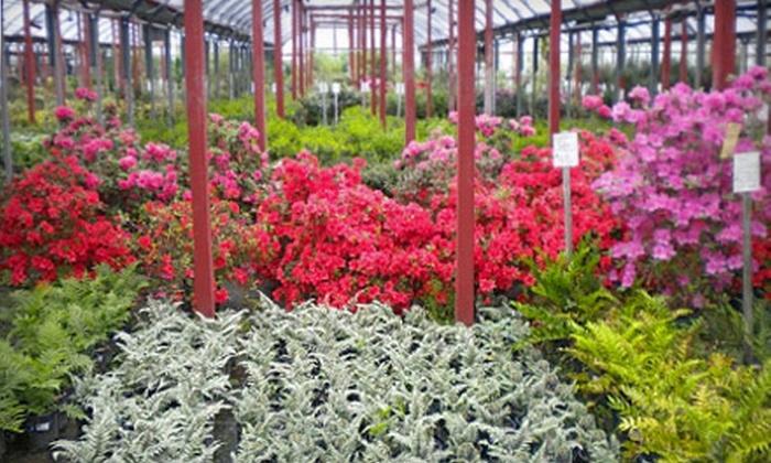 Stringer Nursery - Expressway Industrial And Commercial Center: Gardening Essentials or Plants at Stringer Nursery (Half Off)