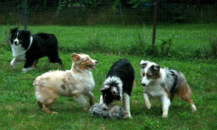 K-9 Barn - Westborough: Five Days of Cage-Free Pet Boarding at K9 Barn Dog Playland (20% Off)