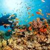 Corso sub per brevetto Easy Diver