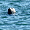 Half Off Seal-Watching Cruise