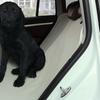 Pet Car Hammock