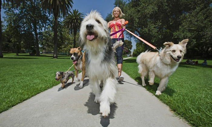 Woof Doggy Woof LLC - Miami: 1, 3, 5, or 10 Half-Hour Dog-Walking Sessions from Woof Doggy Woof LLC (57% Off)