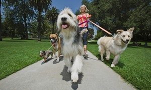 Woof Doggy Woof LLC: 1, 3, 5, or 10 Half-Hour Dog-Walking Sessions from Woof Doggy Woof LLC (63% Off)