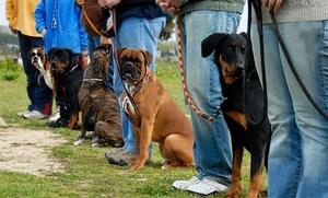 Companion Animal Nanny: Six-Week Dog-Obedience Course from Companion Animal Nanny (33% Off)