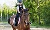 The Davie Ranch - The Davie Ranch: One or Three Private Riding Lessons, or Three or Five Kids' Open-Play Visits at The Davie Ranch (Up to 51% Off)
