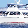 Up to 46% Off Cruise and Dolphin Watching