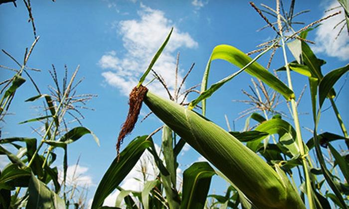 Blue Ridge Corn Maze - Indian Ridge: Blue Ridge Corn Maze for Two, Four, or Six (Up to 57% Off)
