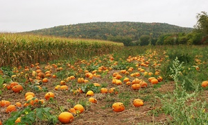 Pick-a-Pumpkin Pumpkin Patch: Corn Maze Admission for Two or Four, Plus $5 Toward Pumpkins at Pick-a-Pumpkin Pumpkin Patch (50% Off)