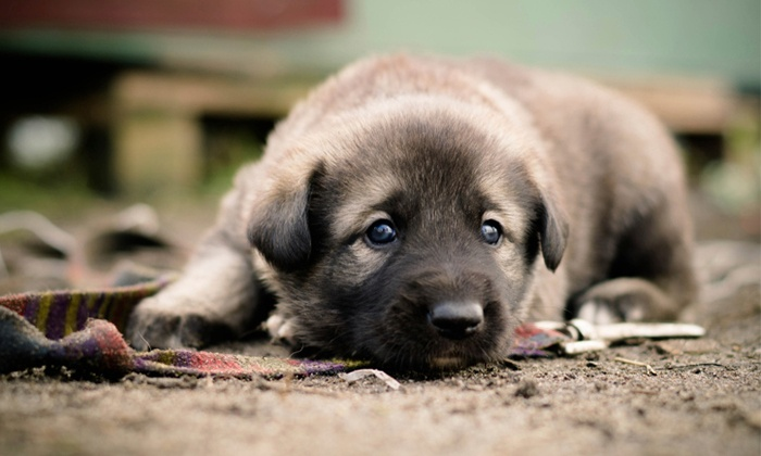 Deshon Animal Hospital - The Southland Country Club: Veterinary Exam and Vaccines for a Puppy or Dog at Deshon Animal Hospital (Up to 57% Off)