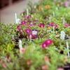 Half Off Garden Supplies at Urban Jungle