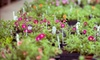 Urban Jungle - Bella Vista - Southwark: $20 for $40 Worth of Plants and Vertical-Gardening Supplies at Urban Jungle
