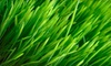 The Sod Father Lawn Care & Odd Jobs: Lawn Aeration for up to 3,000 Square Feet or a Complete Gutter Cleaning from The Sod Father (Up to 61% Off)