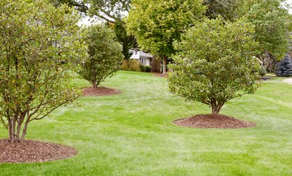 Full Broadleaf Weed-Control Treatment for Up to an 8,000 or 16,000 Square Feet from Weed Man (Up to 57% Off)