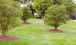 Premierscape LLC: Two or Four Lawn Mowing and Maintenance Service Visits from Premierscape LLC (Up to 53% Off)
