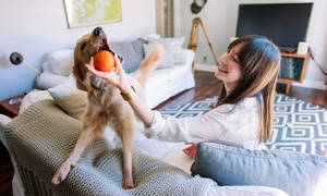 Home Dog Boarding And Pet Services From Dogvacay (up To 57% Off). Three Options Available.