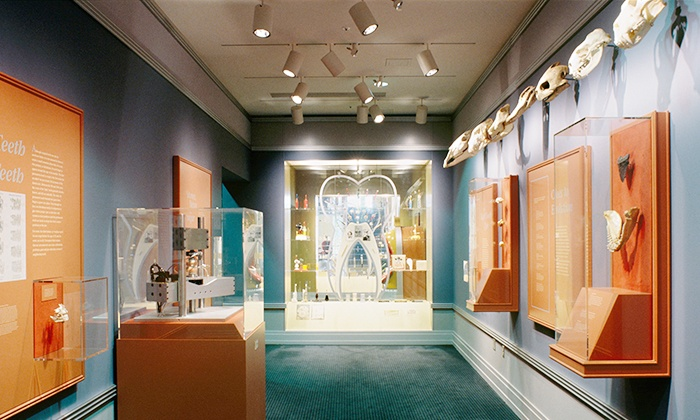 National Museum of Dentistry - University of MD at Baltimore: National Museum of Dentistry Visit for Two or Four (Up to 50% Off)