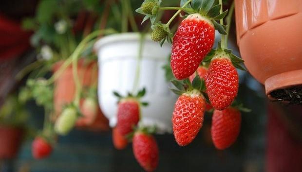 Cameron: Strawberry Park Resort 8