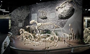 Skeletons: Animals Unveiled!: Skeletons: Animals Unveiled! Visit for Two or Four (Up to 44% Off)