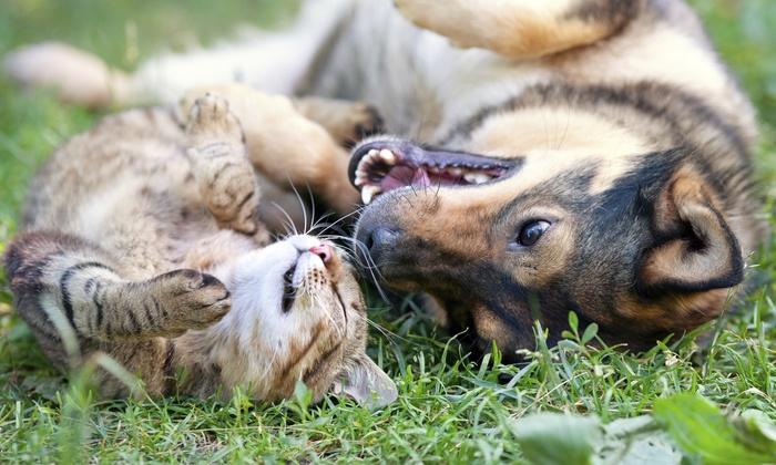 Golden Bear Home Pet Care - Columbus: Five 30-Minute Pet Visits from Golden Bear Home Pet Care (47% Off)