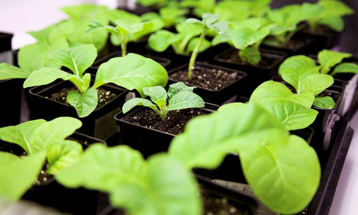 Glow Hydroponics - Edenvale: $25 for $50 Worth of Trees and Plant-Care Products at Glow Hydroponics
