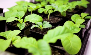 Glow Hydroponics: $25 for $50 Worth of Trees and Plant-Care Products at Glow Hydroponics