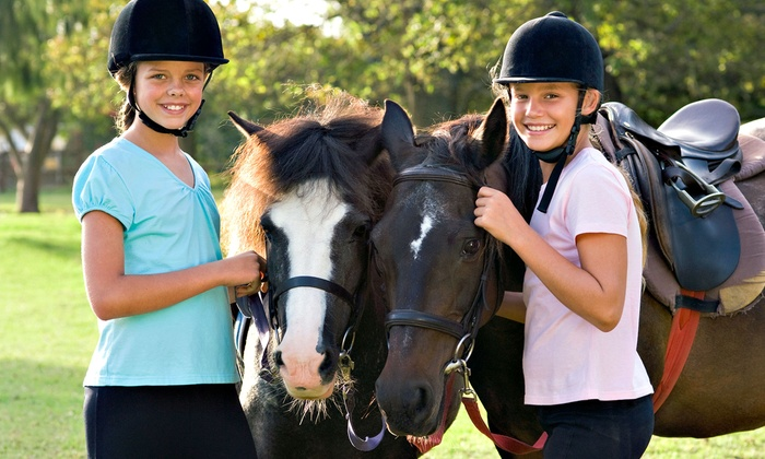 Dunwyn Equestrian Centre - Erin: Horse Riding Lessons and Boarding at Dunwyn Equestrian Centre (Up to 61% Off). Three Options Available.