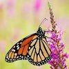 Up to 52% Off Watershed Butterfly Festival