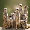 Emmen: camera con colazione e biglietti per il parco WILDLANDS
