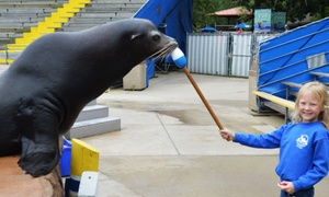 Oceans of Fun: $55 for Hands-On Sea Lion Splash Program on Animal Training at Oceans of Fun ($100Value)