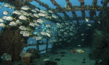 Bali: Shipwreck Ocean Dive Experience for Up to Six People Including Equipment, Lunch and Transfers with Bali Sun Tours