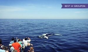 Newburyport Whale Watch: Whale-Watching Tour for One, Tour, or Four from Newburyport Whale Watch (Up to 43% Off)