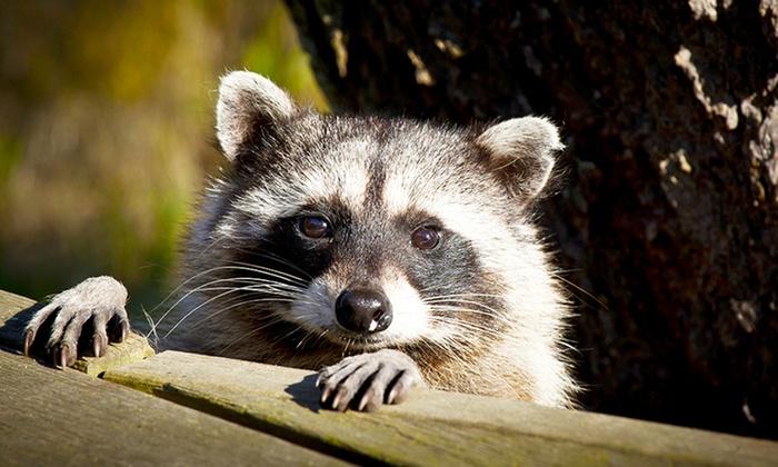 Entrées adultes et enfants pour Le Parc Animalier d'Ecouves dès 9,90 €