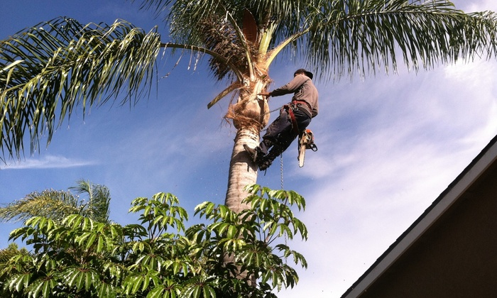 Be Real Tree And Landscaping Service - Orange County: $151 for $275 Worth of Tree-Trimming Services — BE Real Tree and Landscaping Service