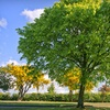 $75 for $230 Toward Tree Care and Removal