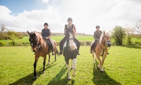 3 o 5 lezioni di equitazione per adulti e bambini al CIR (sconto fino a 79%)