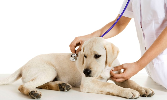 Orange County Animal Medical Center - Laguna Beach: Dog or Cat Health Package with Annual Exam and Vaccines at Orange County Animal Medical Center (51% Off)