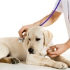51% Off Dog or Cat Health Package
