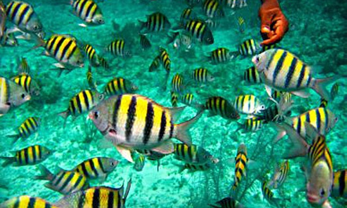 Reef Roamer Catamaran - Key Largo: $18 for a Morning Snorkeling Trip with Equipment Rental from Reef Roamer Catamaran in Key Largo (Up to $33 Value)