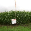 Up to 53% Off Corn Maze at Porter's Patch