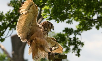 image for Two-Hour Falconry Experience for One or Two at Birds of Prey Centre (Up to 71% Off)