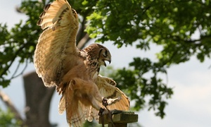 Birds of Prey Centre: Two-Hour Falconry Experience for One or Two at Birds of Prey Centre (Up to 71% Off)